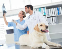List of Animal Care Conferences and Events - Job Seekers Blog - JobStars USA